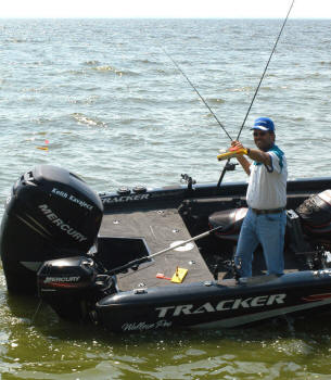 What triggers walleye to feed?