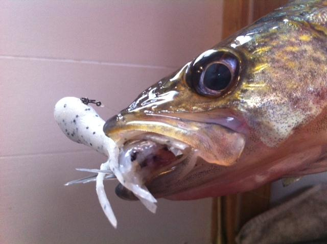 Lake Nipissing Ice Fishing – Rob Hyatt's Bungalow's  Report Jan 2, 3, 4