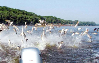 Three US states, Ontario form partnership to keep Asian Carp from entering Great Lakes
